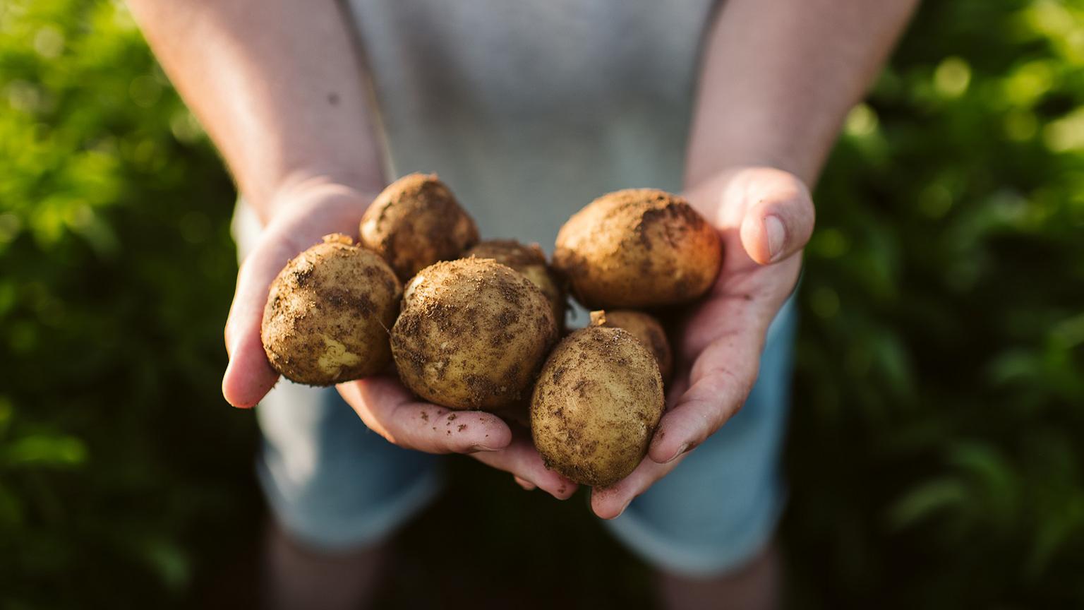Nachhaltiges Nahrungsmittelsystem